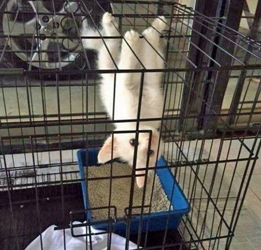 17 Katzen, die einfach nur perfekte süße kleine Spinner sind