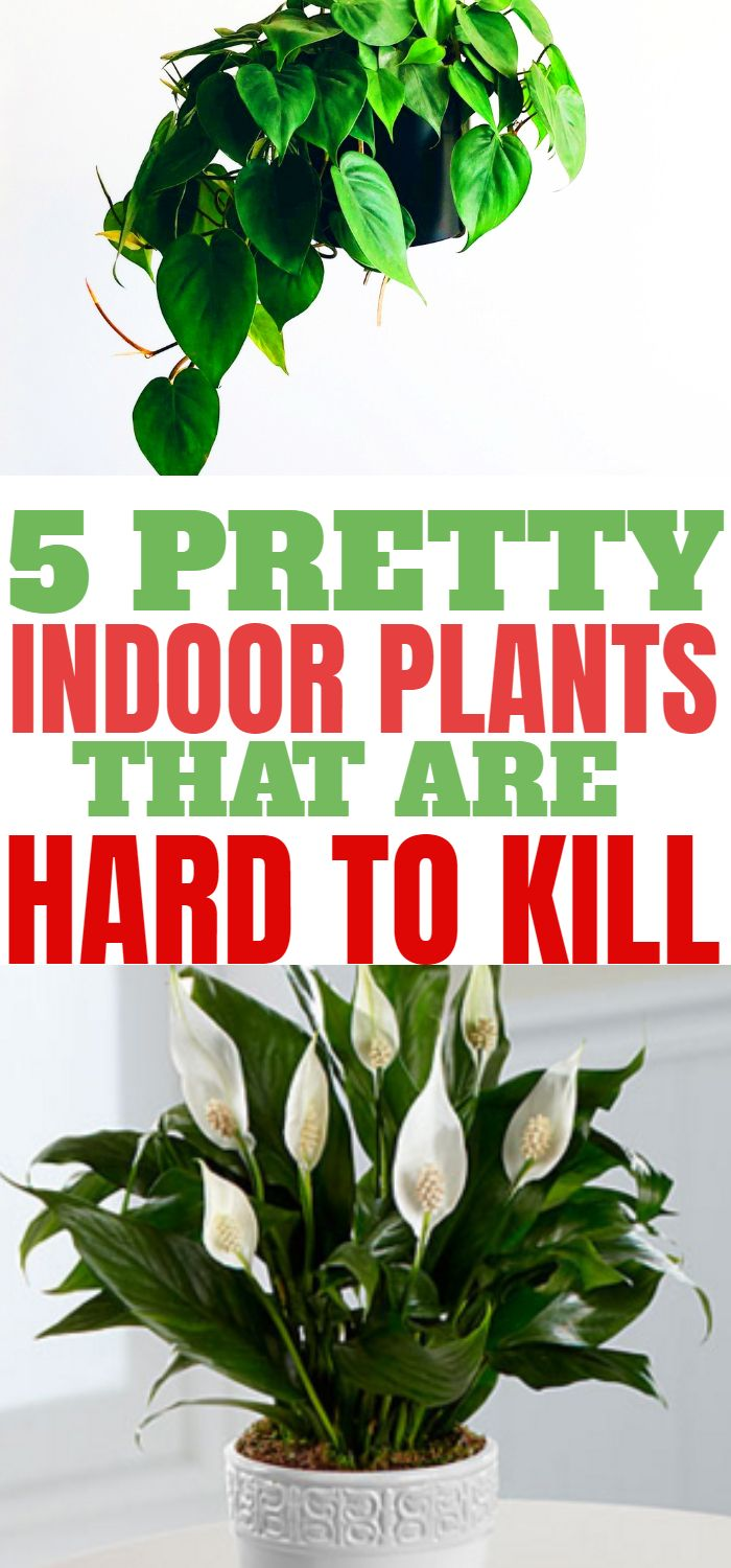 5 Houseplants You Won T Be Able To Kill Low Maintenance Indoor Plants Plants Indoor Plants