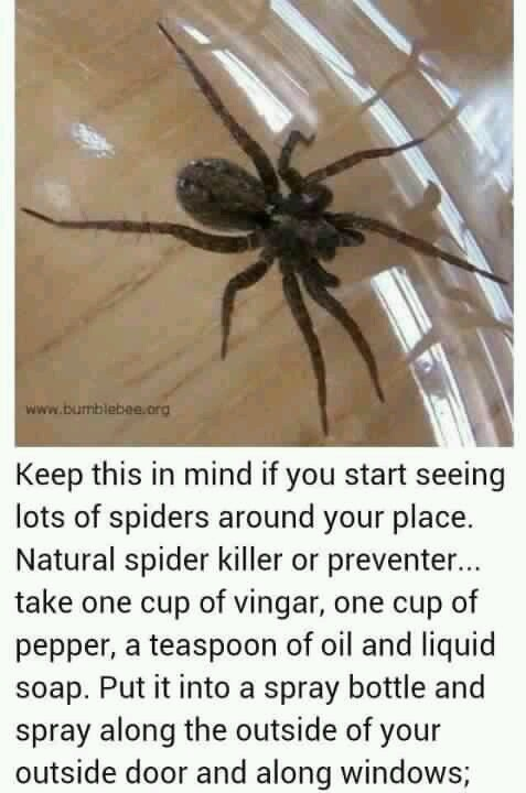 Natural spider killer