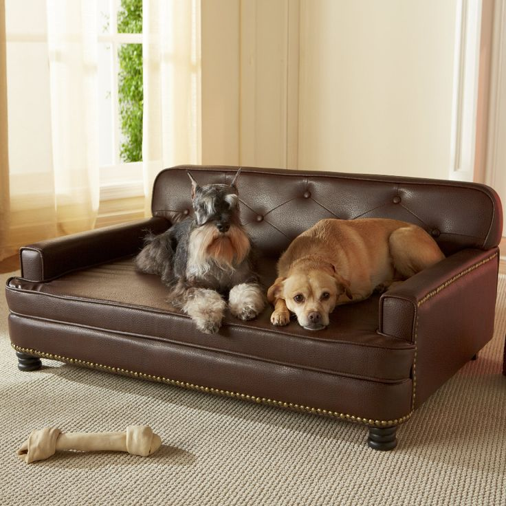 1000 Ideas About Dog Sofa Bed On Pinterest Her Her Dog
