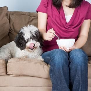 Diabetic Dog Food List