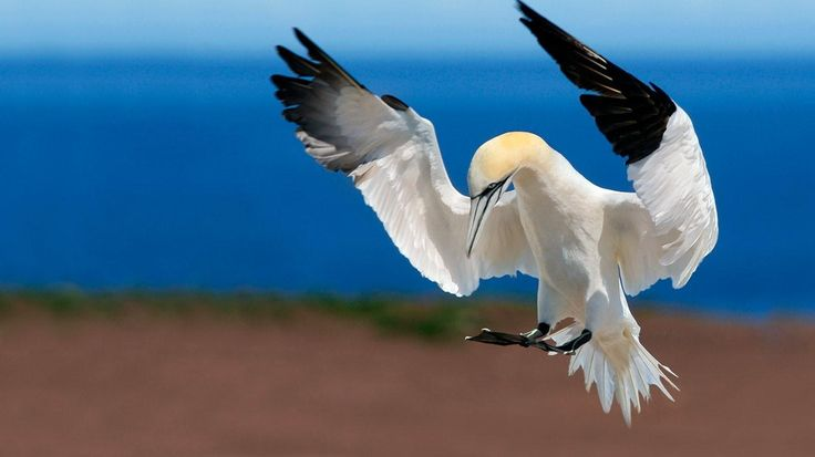 Sylvenstein Lake, Germany | Free Wallpapers Download – Northern gannet at Bonaventure Island and ...