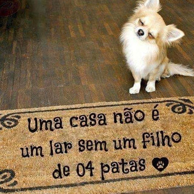EXATAMENTE! ❤️❤️ #domingo  #cachorro  #amocachorro  #amogato  #amoanimais  #gato  #petmeupet