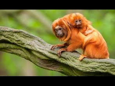 Discover the Top 10 Amazon Rainforest Animals