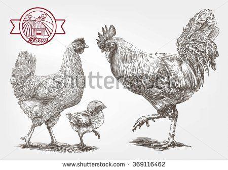 Sketch of brood-hen
