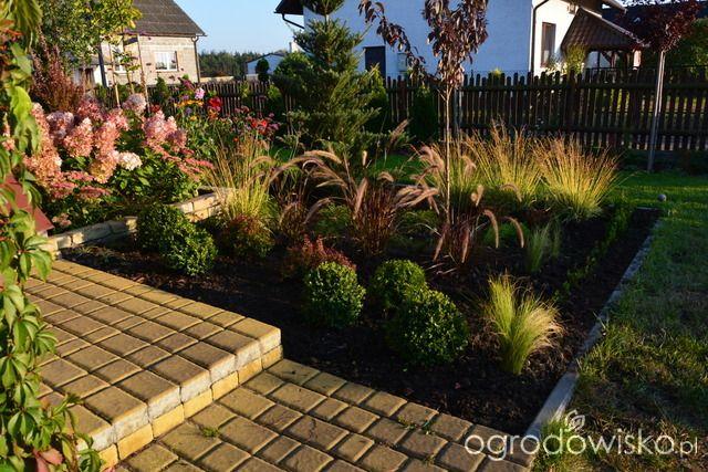 Ogródek Iwony II - strona 402 - Forum ogrodnicze - Ogrodowisko
