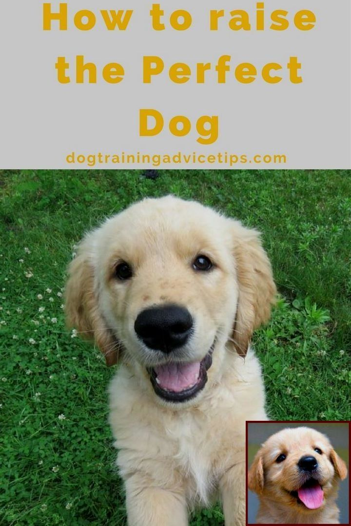 Dog Behavior Assessment Questionnaire And Clicker Training For