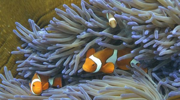 Grande barriera corallina, Australia