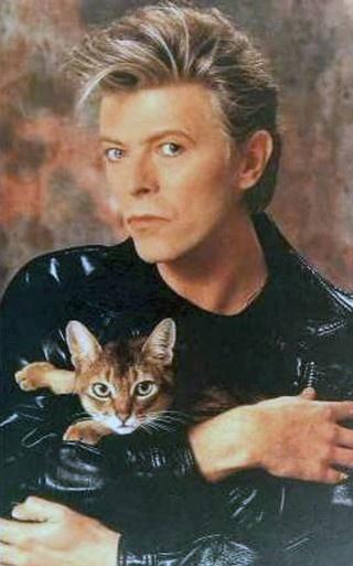 bowie: Cat People, But, Famous People, Celebrity Pet, David Bowie, Catpeopl, Famous Cat, Davidbowi, Cat Memes