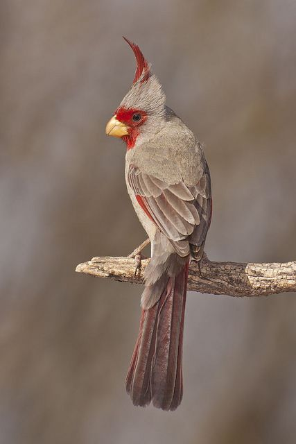 Does anyone know the name of this bird?