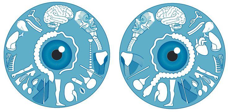 Bardzo łatwy schemat jak zmiany na tęczówce oka wpływają na poszczególne organy wewnętrzne. W tym przypadku lewe i prawe oko.   prof Enji