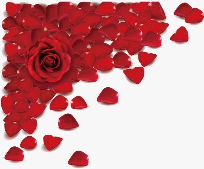 Rose Petal Rose Petal Valentine S Day Png Transparent Clipart Image And Psd File For Free Download Red Roses Background Rose Petals Rose