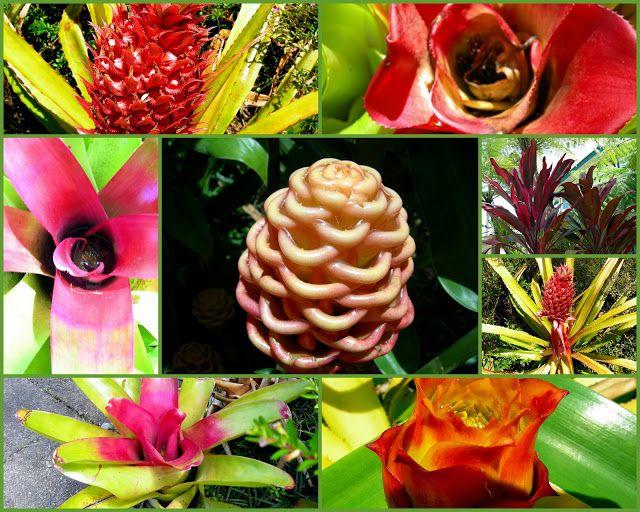 Tropical Far North Queensland: 20. Atherton Tablelands - Tea House Gardens