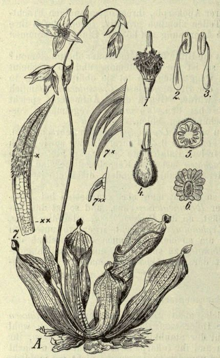 93 Best Old School Plant Diagrams Images On Pinterest