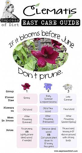 If it blooms before June don't prune! Great way to remember which variety of Clematis to prune.