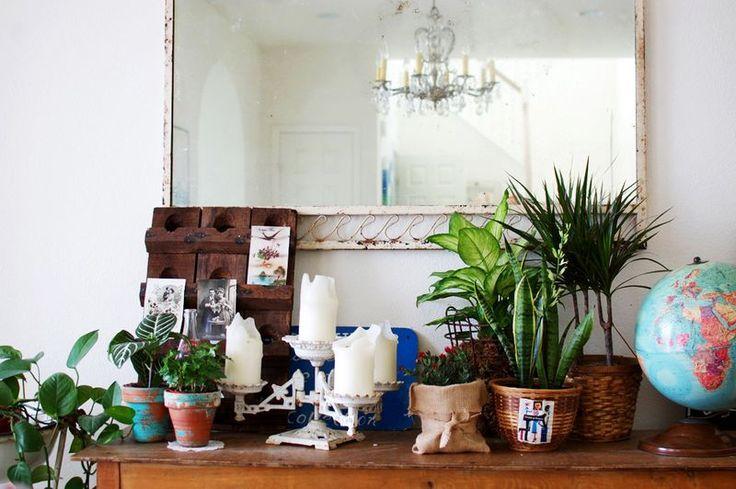 Les 19 meilleures images du tableau dieffenbachia sur for Jardinage d interieur