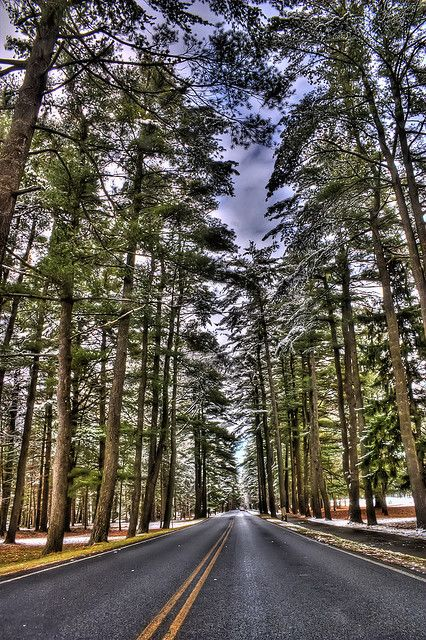 imagine wedding photos amidst these awesome pine trees! Avenue of the Pines - Saratoga Springs, NY, Drove down this many times, doing many weddings, still awesome