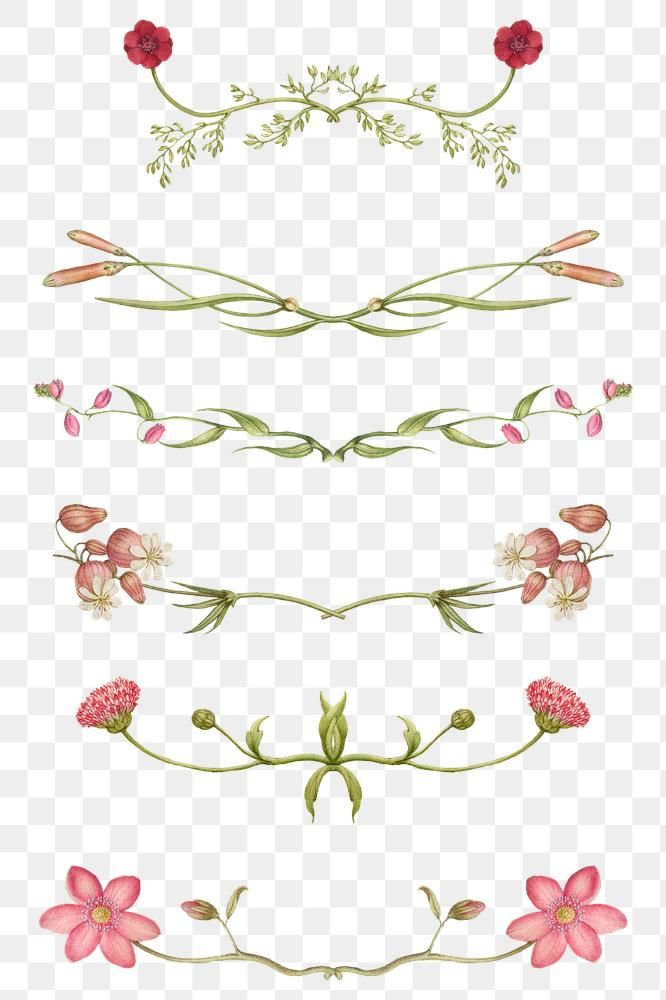 Floral Divider Png Remix From The Model Book Of Calligraphy Joris Hoefnagel And Georg Bocskay Free Image By Rawpixel Blossom Design Free Illustrations Floral