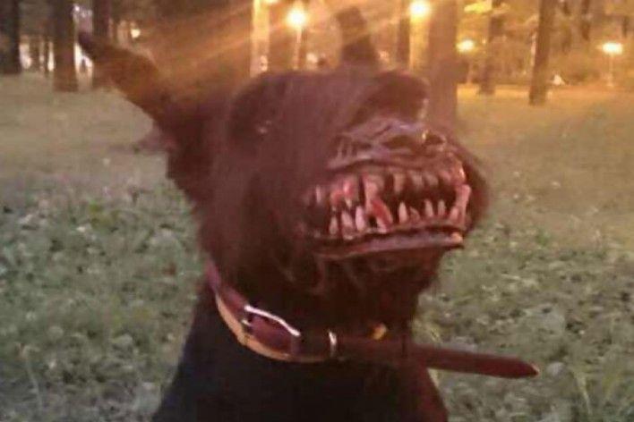 """Φίμωτρο σκύλου για """"φοβερές"""" βόλτες !"""