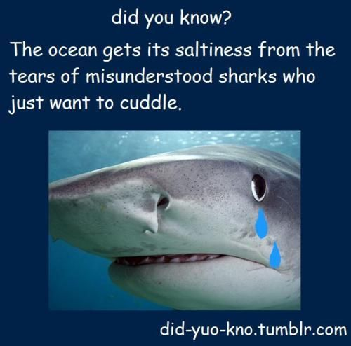 Did you know...Poor Sharks, Laugh, Sharks Weeks, The Ocean, Funny Stuff, Humor, Things, True Stories, Misunderstood Sharks