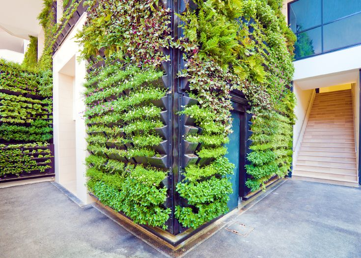 The basics of vertical gardening explained, including locations, benefits and challenges. Small Space Gardens http://www.pinterest.com/wineinajug/small-space-gardens/