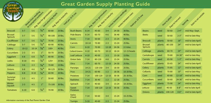 70 best Fruit & Vegetable Gardening images on Pinterest | Vegetable ...