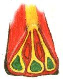 PCC Instructions - Folded cane - Use as dragonfly wings - red is black, yellow is blue, green is green