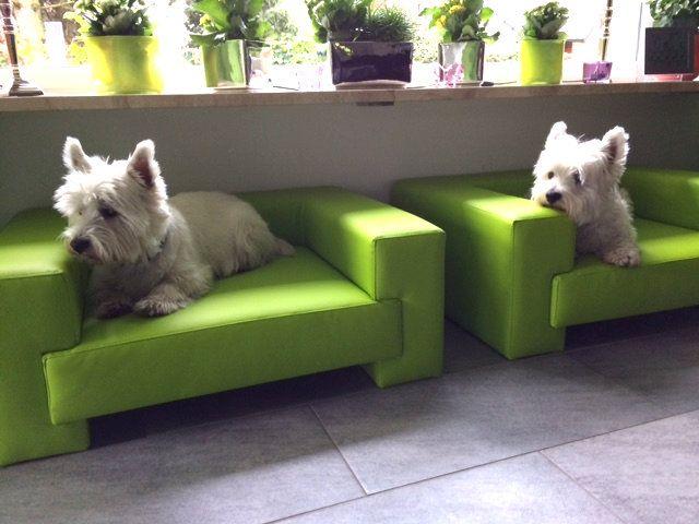 Designer Hundesofa DOGBED Kunstleder Preiswolf24.de - Hundebetten Qualitätsvoll schön und gemütlich