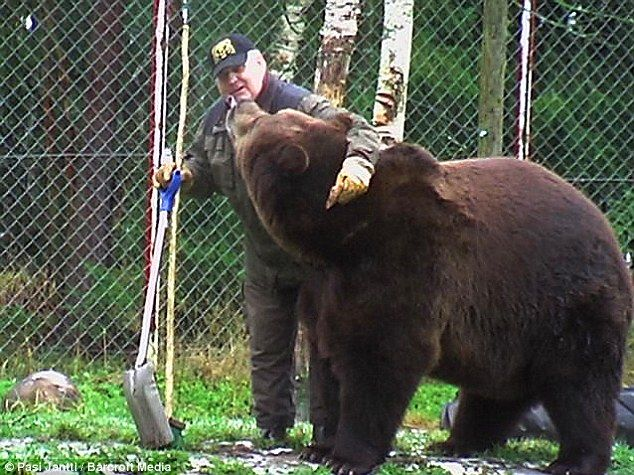 Sulo Karjalainen throws a friendly arm around the shoulders of a bear