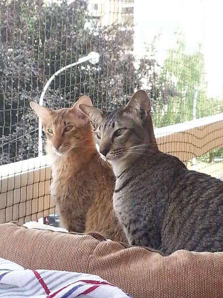 securicats se spcialise dans la pose de filets de protection pour chats pose de filets