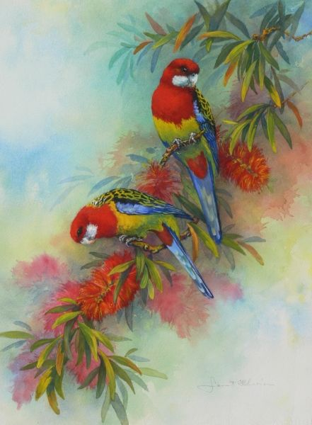 Eastern Rosellas painting by Janet Flinn  I grew up with these birds around me :)