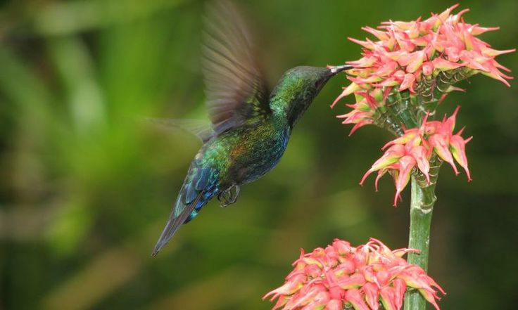 Spot hummingbirds on the hike through the tropical forest of Gros Piton. http://www.secretearth.com/attractions/1591-climb-gros-piton