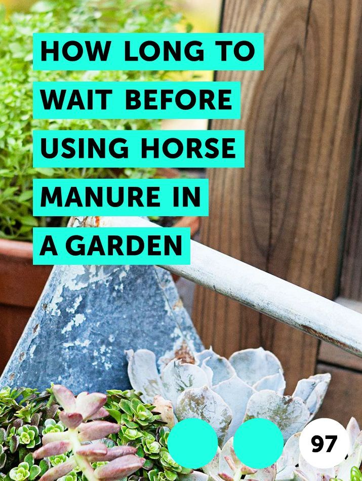 13782fb185f7939d19f3db485b355c3a - Is Horse Manure Good Fertilizer For Gardens