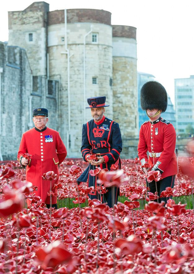 Historical Royal Palaces / Richard Lea-Hair Three generations of guards plant a ceramic poppy. From left to right: Chelsea Pensioner Albert Willis, Yeoman Warder Paul Cunliffe & Guardsman Joseph Robinson.