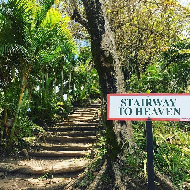 """Pin for Later: 9 Amazing Things to Do on the Caribbean Island of St. Lucia Climb the """"stairway to heaven"""" at the Tet Paul Nature Trail."""