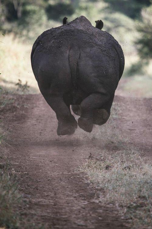 mstrkrftz:  Rhino off all fours by Geoffrey Lam