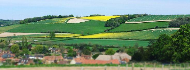 Dorset vistas