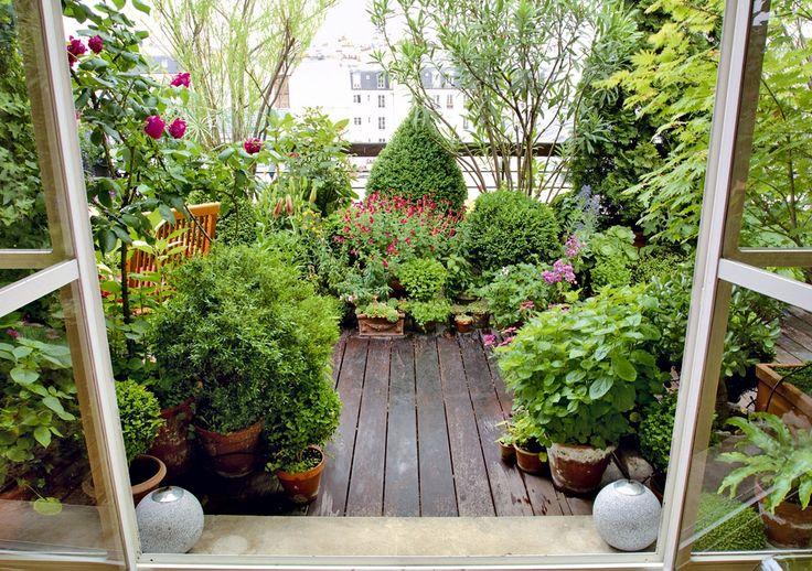 Oltre 1000 idee su piante da balcone su pinterest piante for Piante da frutto a 1000 metri