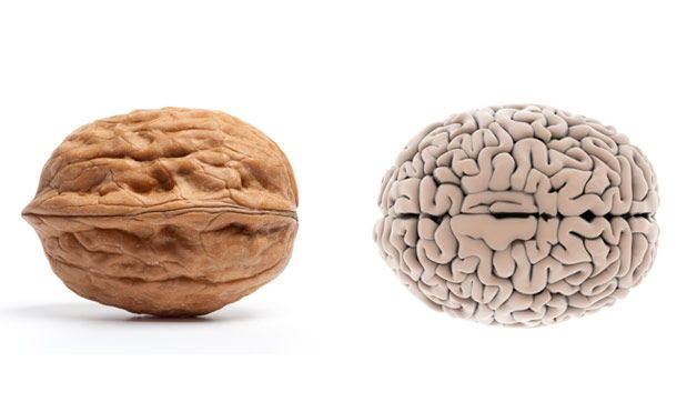 """Foods That Look Like Body Parts They're Good For ~The folds and wrinkles of a walnut bring to mind another human organ: the brain. The shape of the nut even approximates the body part, looking like it has left and right hemispheres. And it's no surprise walnuts are nicknamed """"brain food""""    Read more: Food Nutrition Facts - Healthy Living Tips at WomansDay.com - Woman's Day"""