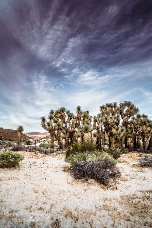 Desert Landscape Photography Red Rock Canyon State Park Best
