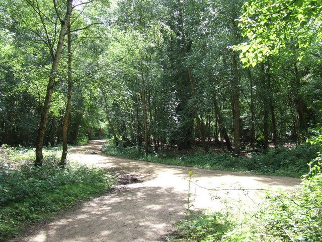 epping forest london - Cerca con Google