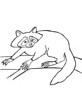 20 best images about racoons on Pinterest | Cartoon, Face ... Raccoon Face Coloring Page