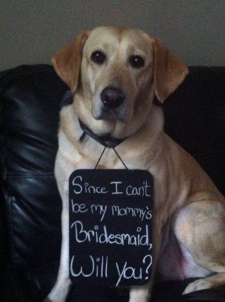Very cute way to ask someone to be your bridesmaid! Incorporating your dog :)