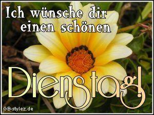 Dienstag Bilder - Jappy GB Pics - Wochentage - 007-blume-zum-dienstag-www.gb-stylez.de.jpg