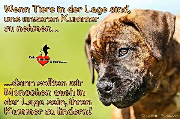 Doggy Petitions - Tierschutz / Animal Welfare Seite 3