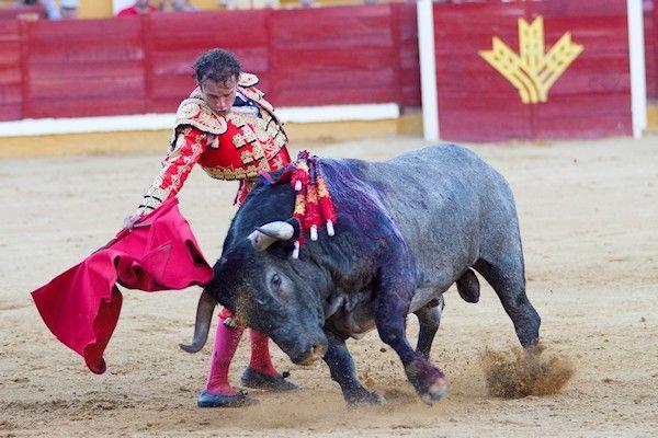 Het overlijden van een stierenvechter in Spanje heeft geen gevolgen voor de sport in Nederland. De 29-jarige matador Victor Barrio werd door een stier op de hoorns genomen en overleefde dat niet. Het ongeluk gebeurde tijdens het stierenvechtfestival in het Spaanse Teruel. De hoorn van de stier doorboorde de borstkas van matador Barrio. Hij overleed op weg naar het ziekenhuis. [...]