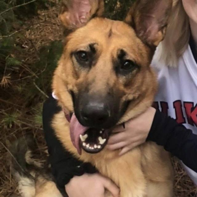 Pin On Photos From Lost Dogs Minnesota