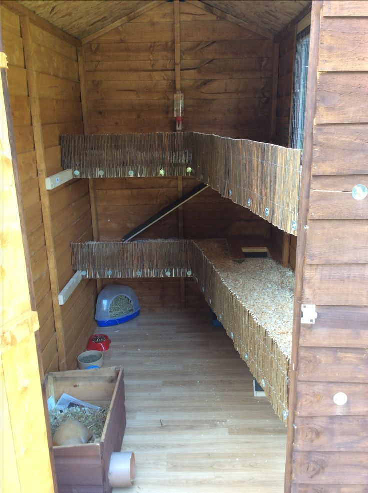 Inside The Guinea Pig Shed Farming Ideas Pinterest