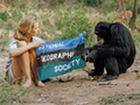 In honor of Jane Goodall's birthday, April 3rd. Jane Goodall: A Retrospective. from the Fabulous Birthday Blog.
