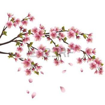 japanse+kers%3A+Realistische+sakura+bloesem+-+Japanse+kerselaar+met+vlag+en+bloemblaadjes+op+een+witte+achtergrond+Stock+Illustratie